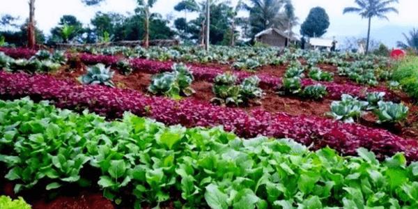 Mengenal Lebih Jauh Teknologi Dalam Pertanian Organik1