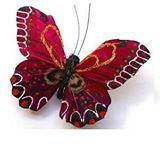 butterfly-healing