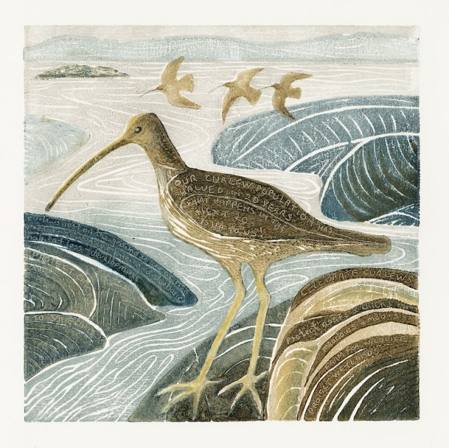 Curlew in the Estuary - but for how long?