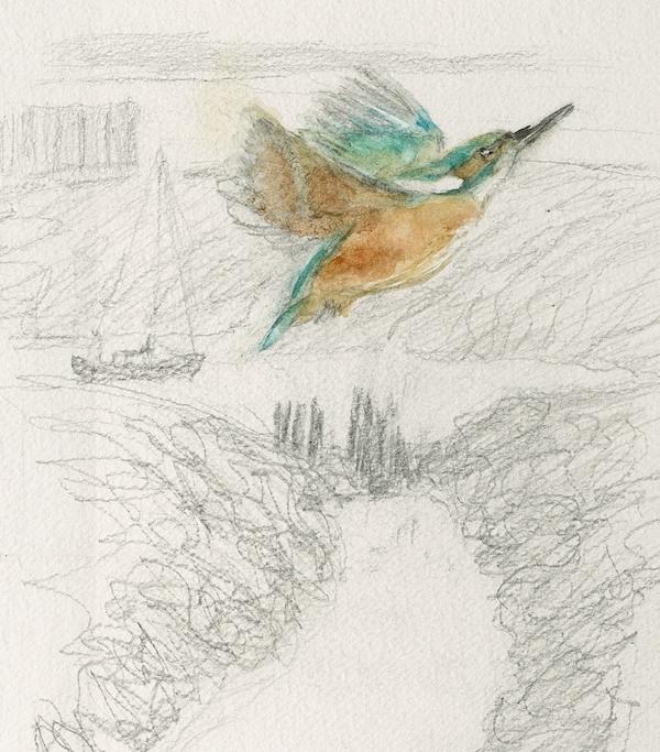 kingfisher4