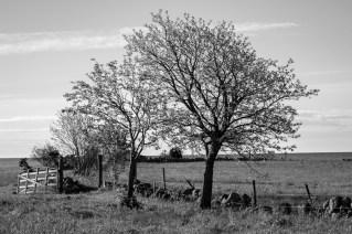 Trädparad