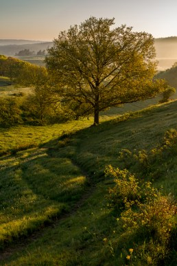 Träd (Brösarps södra backar)