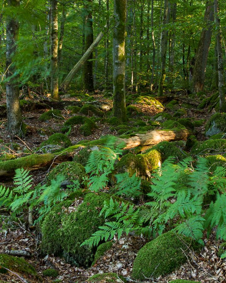 Skog (Bjurkärr)