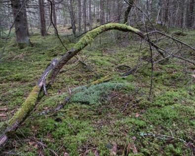 2017-04-02 Högstorpskogen (Växjö)