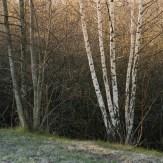 Trädgrupper vid Rocksjön