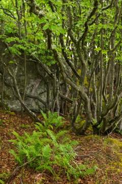 Trädgruppen