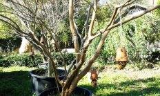 comederos-aves-colocados-en-arbol-viveros-de-ulia