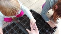 plantar-semillas-ninos