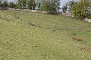 Парк оленей, Хоптаун, Эдинбург, Шотландия