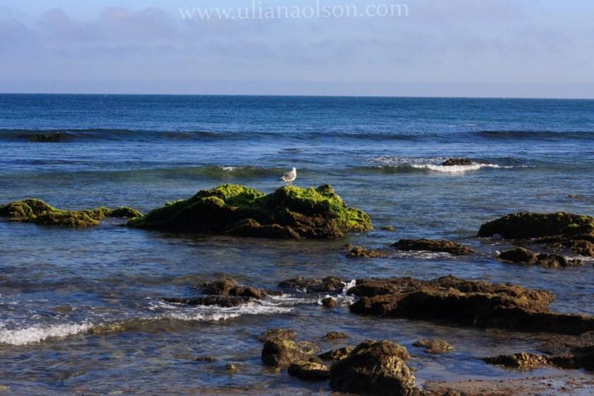 Malibu-Paradise Cove (14)
