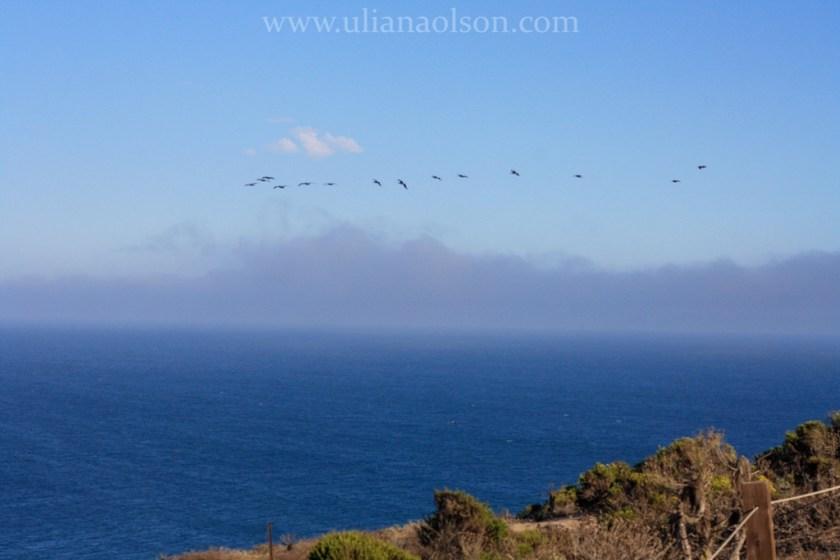 Malibu-Paradise Cove (22)