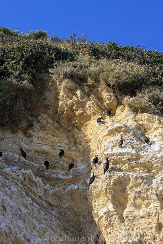 Malibu-Paradise Cove (7)