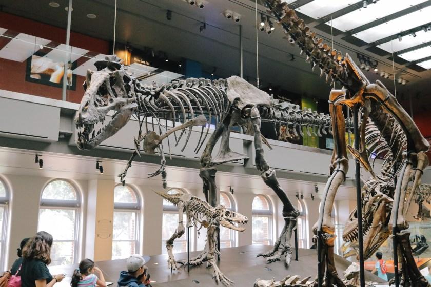 Natural-History-Museum-2826