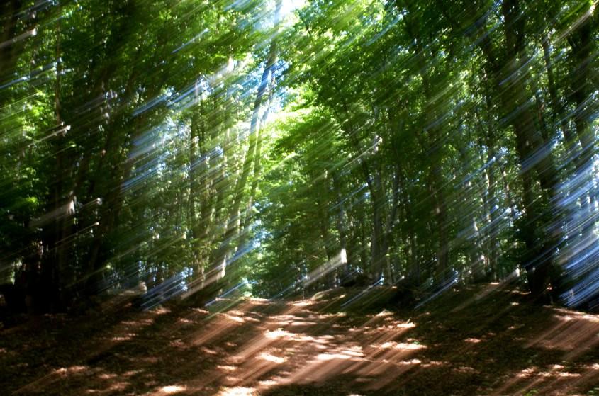 Waldweg Rügen