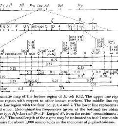 j genetic regulatory mechanisms in the synthesis of proteins j mol biol 3 318 356 1961 http www sciencedirect com science  [ 1131 x 749 Pixel ]