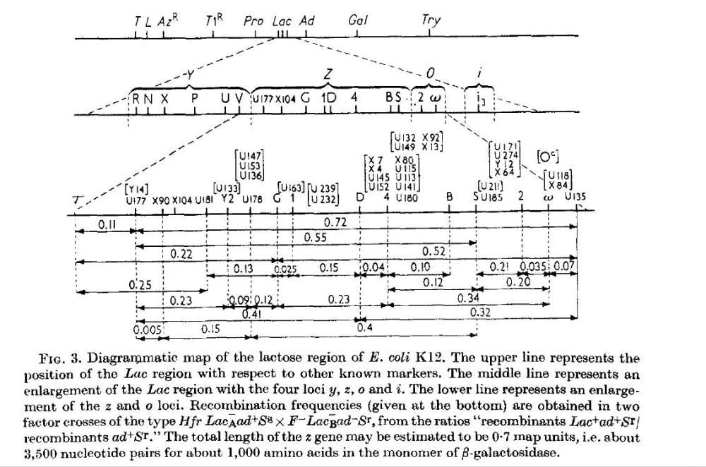 medium resolution of j genetic regulatory mechanisms in the synthesis of proteins j mol biol 3 318 356 1961 http www sciencedirect com science