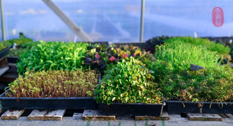 Baby herbs.