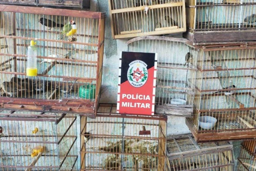 Polícia Ambiental resgata mais de 50 aves silvestres e prende um suspeito de tráfico de animais em Santa Rita