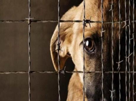 Cómo denunciar los casos de maltrato animal? | Últimas Noticias