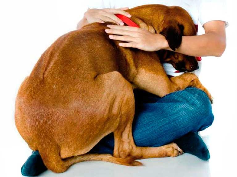 ¿Qué hacer con tu mascota si te ausentas a causa del covid-19?