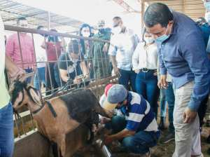 Debate draft of the Law to promote livestock in Falcón