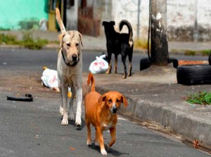 They join forces in Nueva Esparta to care for abandoned animals