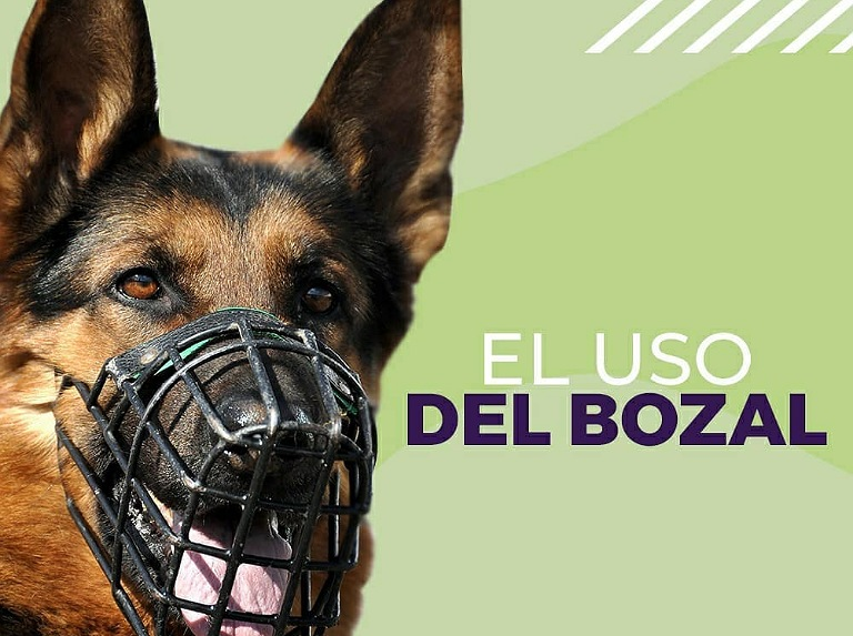 The muzzle, a tool that can not be missing at the time of the walk