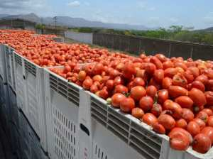 Agroindustrial Complex produces more than a million sauces in Guárico