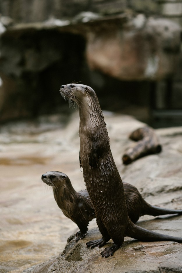 For this unique zoo bachelorette party, the bride and her friends got to feed and train animals like these river otters! A Zoo Bachelorette Party | Ultimate Bridesmaid | CTG Photography