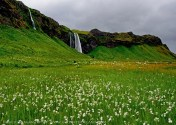 iceland Waterfall & meadow by jack graham