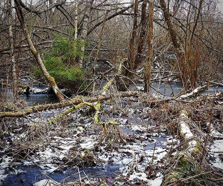 Nämen! Är det inte Kiss of Shrek som ligger där och väntar på att den sista vintern ska bytas mot kloffsande löpskor?  Naturen kommer visa upp alla sina sidor den 29 april. I hinderbaneloppet som älskar trail.  -------------------------------------------  ------------------------------------------- @merrellnordics