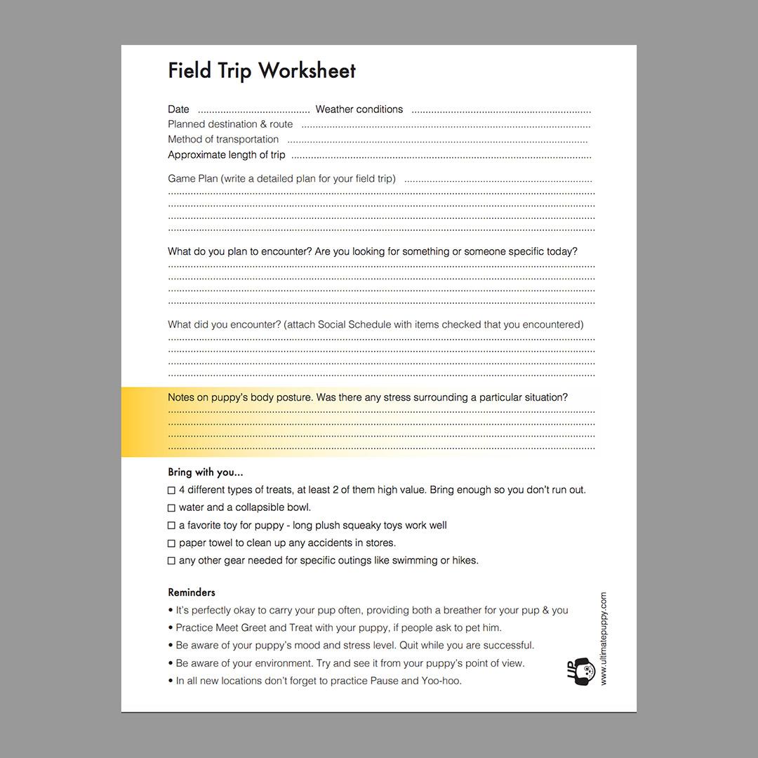 Socialization Field Trip Worksheet