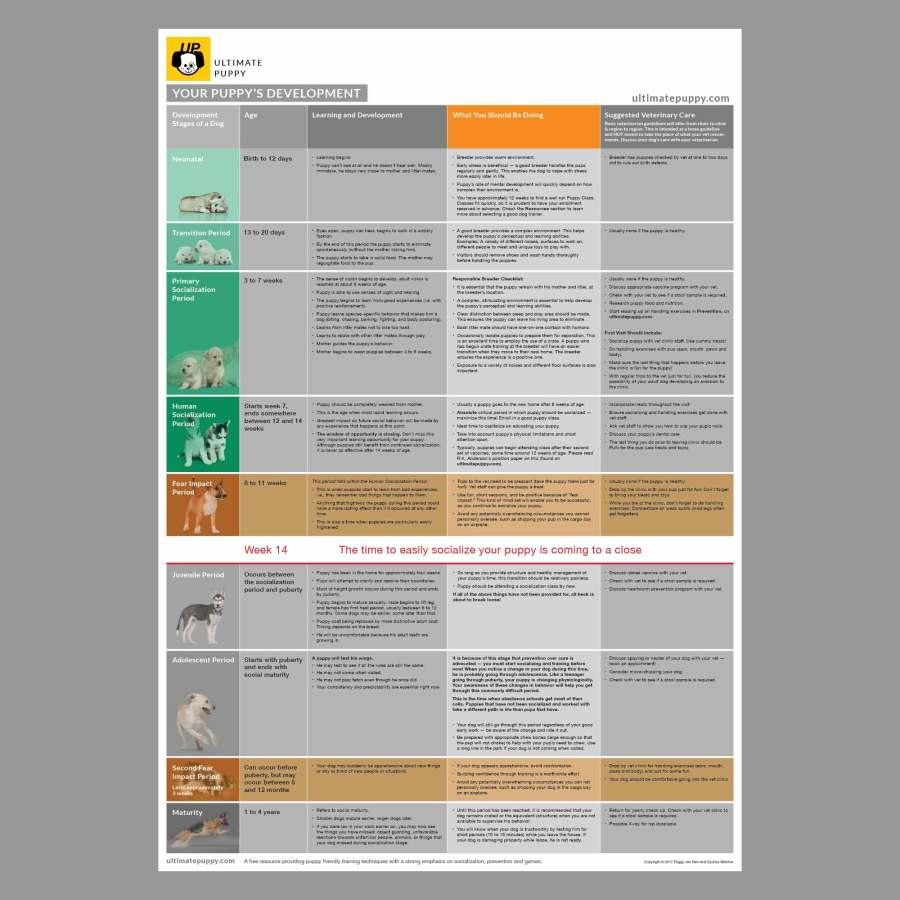Puppy Development Wall Chart
