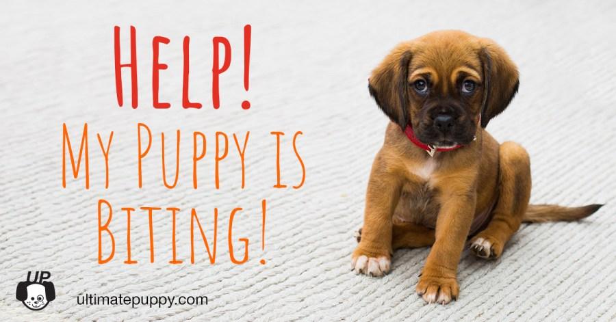 help! my puppy is biting