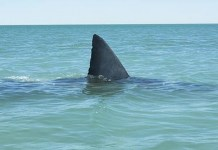 San Foca, squalo nelle acque salentine