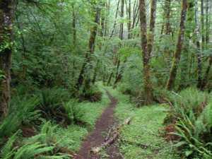 Oregon Long Distance High School Running Camp