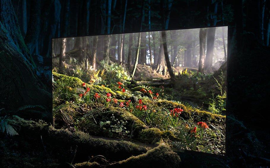 Sony macht Launch der Bravia Oled AF8-Serie zur Vernissage