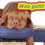"""Sprachassistenten in der Kritik: """"Kein Ersatz für Fernbedienung"""""""