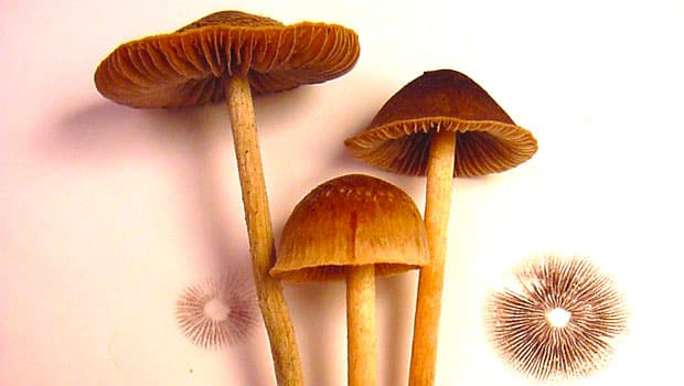 'I took magic mushroom drug psilocybin in clinical trial ...