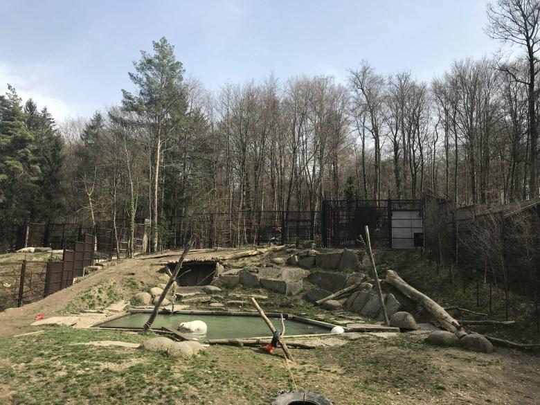 Urso branco do Parque Zoológico e Botânico de Mulhouse