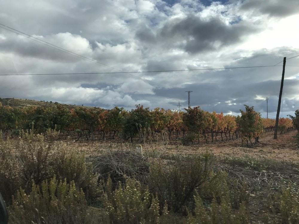 Os vinhedos infinitos que percorremos nas estradas de Rioja
