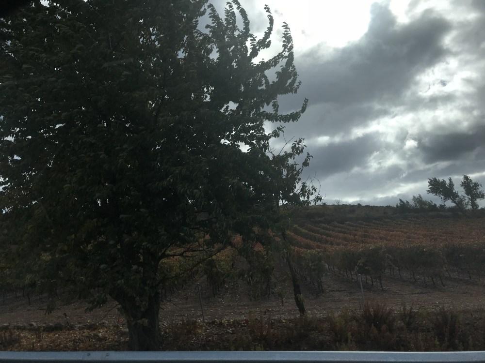 Os vinhedos de Rioja no inverno