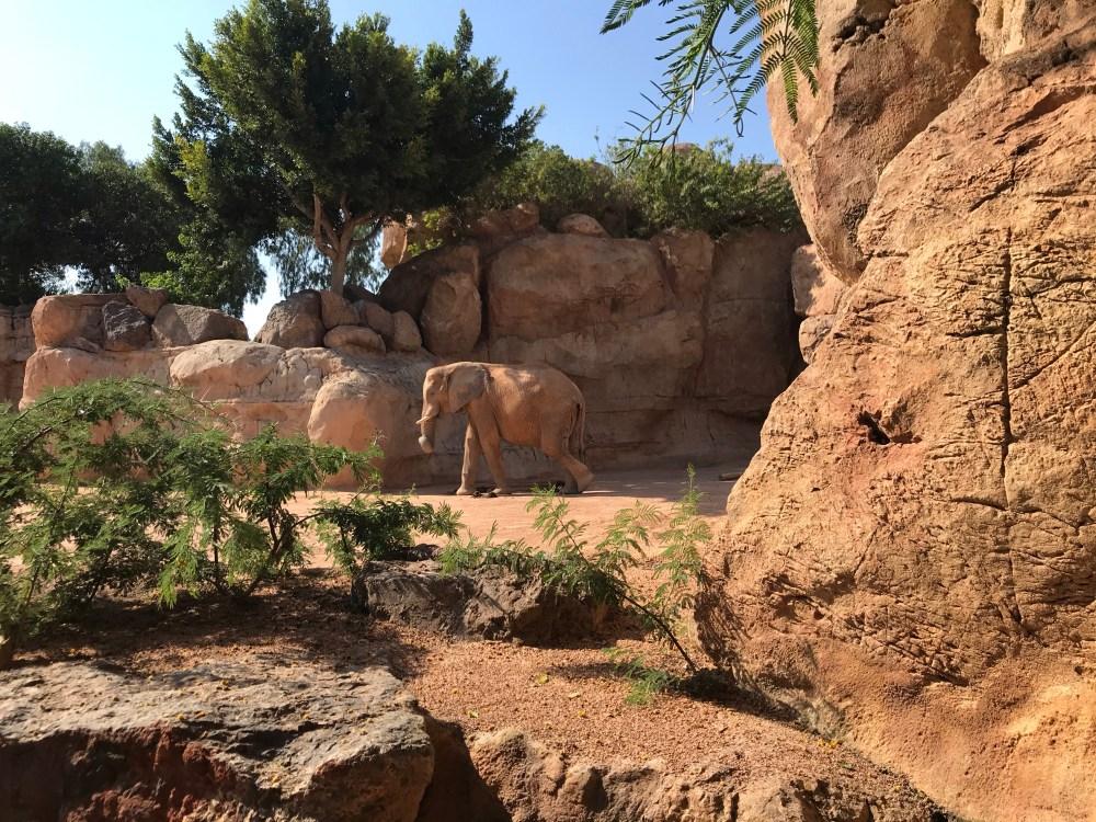 Bioparc de Valencia: mais que um zoo na Espanha