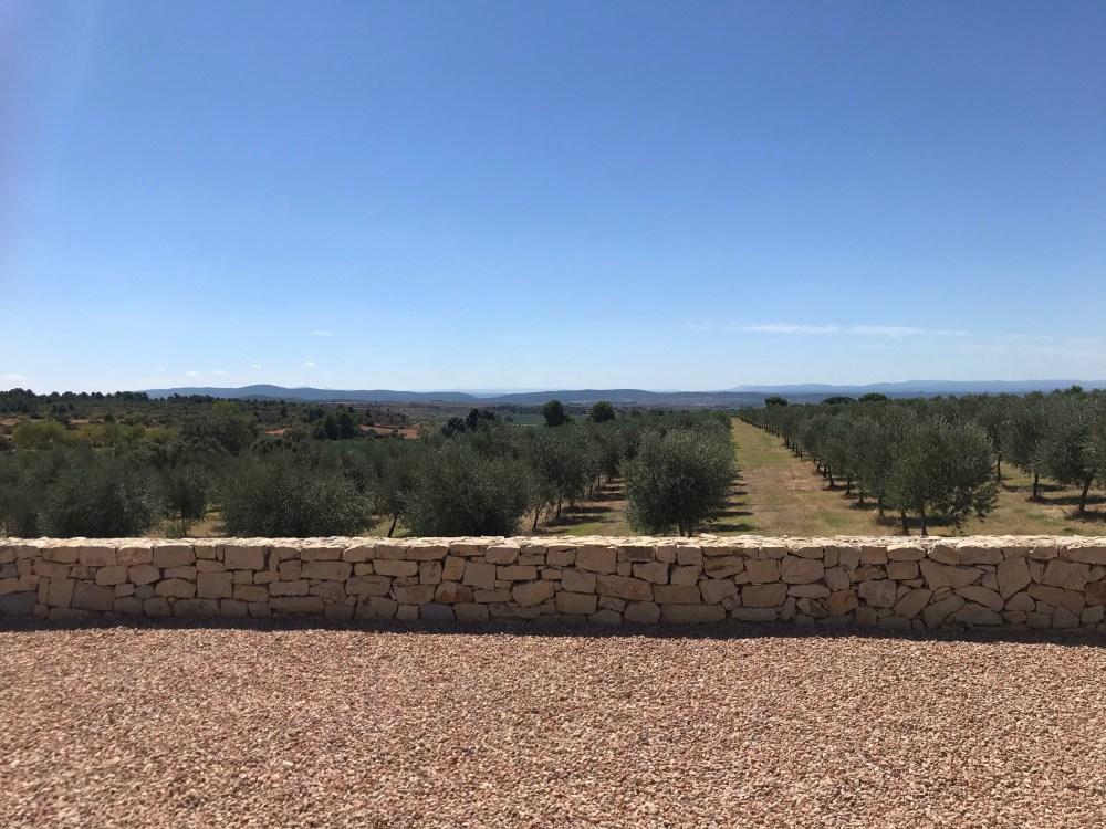 Aqui estão cerca de 18 mil oliveiras