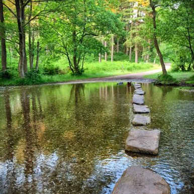 Don't Slip! Stepping Stones at Cannock Chase
