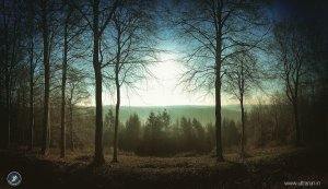Dawn over Dalby Forest