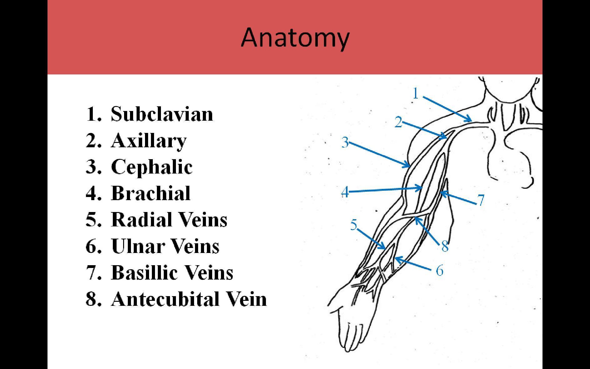 antecubital fossa diagram holden rodeo stereo wiring beste upper limb venous anatomy ideen menschliche