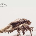 huesos-deforestados-ultravioleta-1