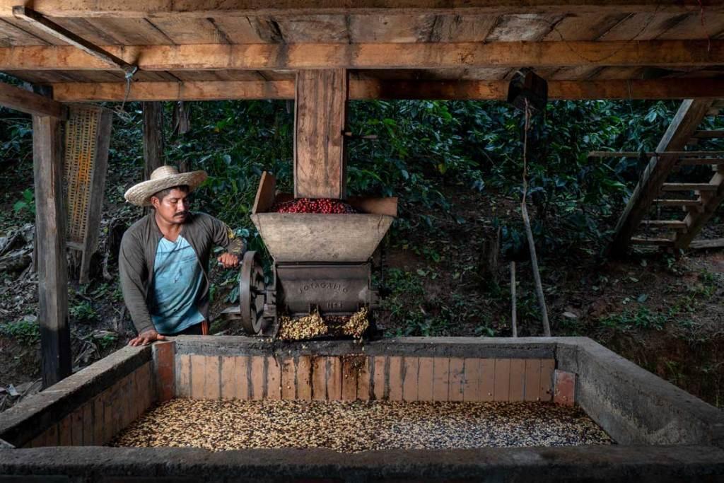 ESPERANZA-DE-COLOMBIA-El-mapping-de-don-Fernando-el-recolector-de-café-2-ultravioleta