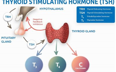 New Guideline for TSH- Thyroid Stimulating Hormone